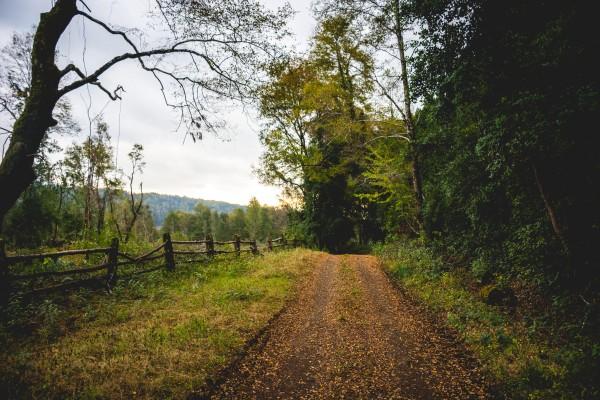 Camino Inicio Sendero