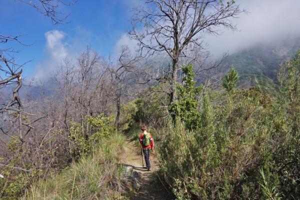 Entrando al bosque de robles